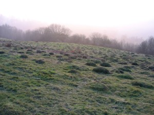 Pimply grassland on a hazy Coombe Hill