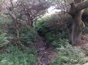 In the depths of Fairlight Glen